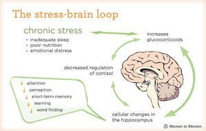 cerebro-estres