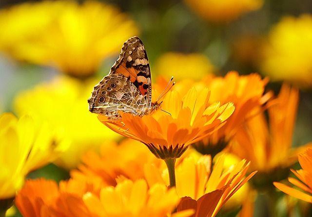 butterfly_640